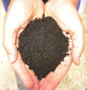 Premium Vermicompost Created by the Decomposer Gang